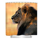 An Adult Male African Lion, Panthera Shower Curtain