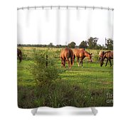 An Afternoon With Friends Shower Curtain