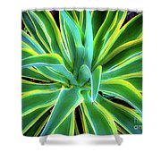 An Agave In Color  Shower Curtain