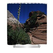An Agave Plant In The Desert Landscapt Shower Curtain