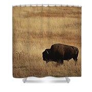 An American Bision In Golden Grassland Shower Curtain