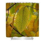 An American Chestnut Tree Castanea Shower Curtain