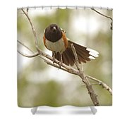 An Angry Towhee Shower Curtain