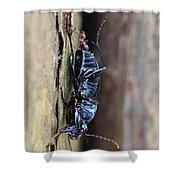 An Ant's Haul Shower Curtain