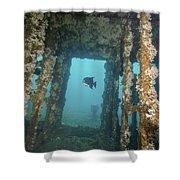 An Atlantic Spadefish Swims Amongst Shower Curtain