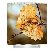 An Autumn Leaf Suspended Shower Curtain