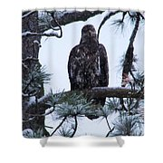 An Eagle Gazing Through Snowfall Shower Curtain
