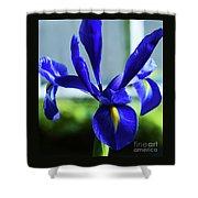 An Irish Iris Shower Curtain