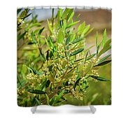 An Olive Tree Shower Curtain
