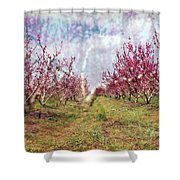 An Orchard In Blossom In The Golan Heights Shower Curtain