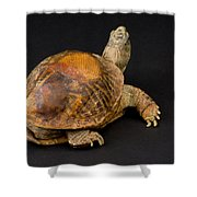 An Ornate Box Turtle With A Fiberglass Shower Curtain