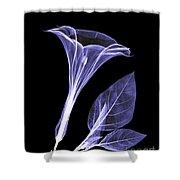 An X-ray Of A Datura Flower Shower Curtain