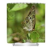 Anartia Butterfly In Wonderland  Shower Curtain