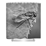 Anatomy Of A Pest - Bw Shower Curtain