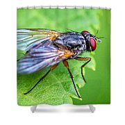 Anatomy Of A Pest Shower Curtain