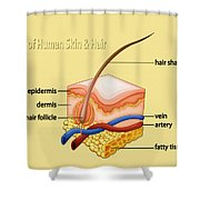 Anatomy Of The Skin And Hair Shower Curtain