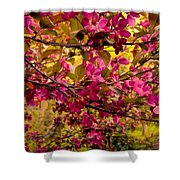Ancestral Branches Of Salamanca Shower Curtain
