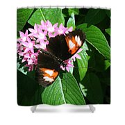 Anchored Down - Butterfly Shower Curtain
