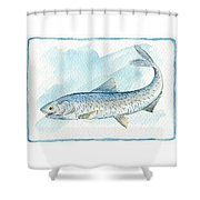 Anchovy Shower Curtain