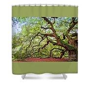 Ancient Angel Oak Tree  Shower Curtain