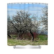 Ancient Apples Budding Out Shower Curtain