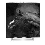 Ancient Black Horse No 1 Shower Curtain