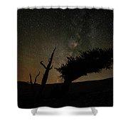 Ancient Bristlecone Shower Curtain