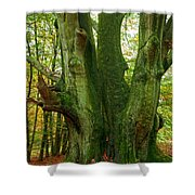 Ancient German Oak Trees In Sababurg Shower Curtain