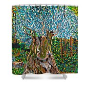 Ancient Olive Tree Shower Curtain