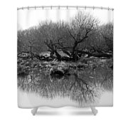 Ancient Pollard Trees Shower Curtain