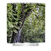 Ancient Tree Luxembourg Gardens Paris Shower Curtain