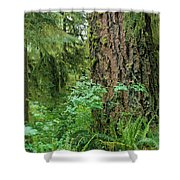 Ancient Trees Shower Curtain