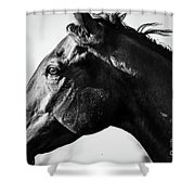 And Embers Rise Shower Curtain