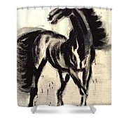Andalusian Colt Shower Curtain