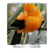 Andean Cock Of The Rock Shower Curtain