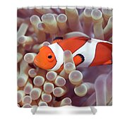 Anemone And Clown-fish Shower Curtain