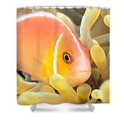 Anemone, Close-up Shower Curtain