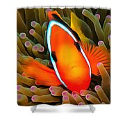 Anemone Fish Shower Curtain