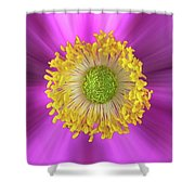 Anemone Hupehensis 'hadspen Shower Curtain by John Edwards