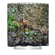 Anemone Reflection  Shower Curtain