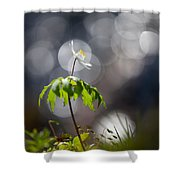 Anemone  Shower Curtain by Rikard Strand