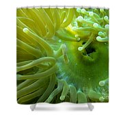 Anemone Shrimp2 Shower Curtain