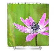Anemone Stellata Shower Curtain