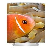 Anemonefish Shower Curtain