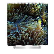 Anemonefish Hiding Shower Curtain