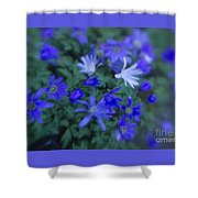 Anemones 1 Shower Curtain