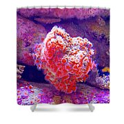 Anemones In Monterey Aquarium-california   Shower Curtain