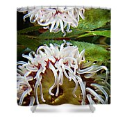 Anenome Reflection Shower Curtain