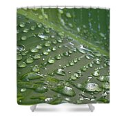 Anew Shower Curtain