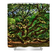 Angel Oak Morning Shadows Charleston South Carolina Shower Curtain